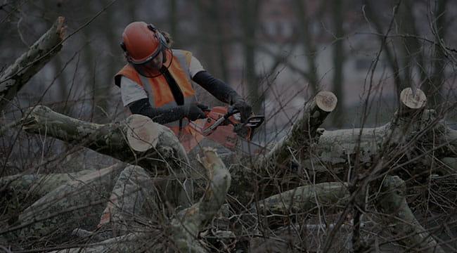 McKinney Tree Service